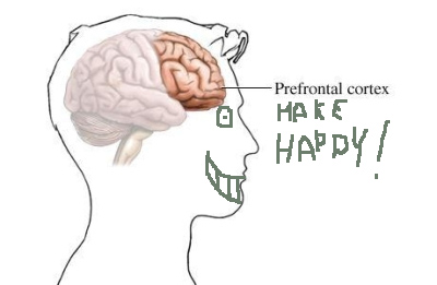 A prefrontal cortex means sound judgement – you think? | Drinking ...